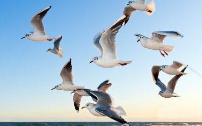Comment agir pour la protection de la faune ?